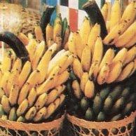 pisang ambon